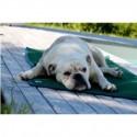 Tapis de confort sleepy dog