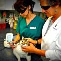 K-Laser® thérapie vétérinaire sur les chats chiens nac chevaux