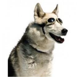 lunettes-de-protection-pour-animaux-k-laser.jpg