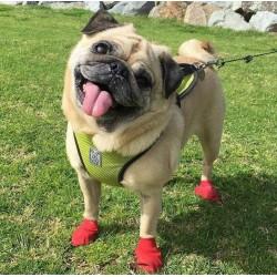 Chaussures pour chien PAWZ