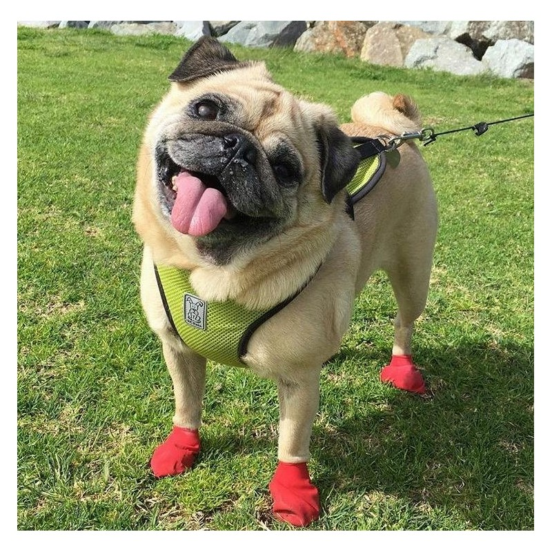 chaussure-protection-coussinets-pour-chien-pawz.jpg