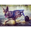 Supports de pattes arrières chariots roulant chien chats Walkin Wheels Mikan