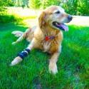 Attelle rigide walkin wheels – patte avant chien et chat