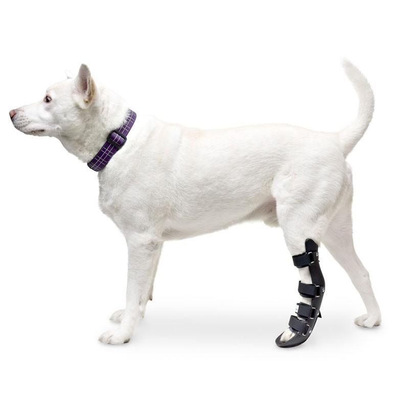 Attelle rigide walkin wheels – patte arriere chien et chat