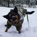 Système ski pour chariot roulant chien Walkin'Pets Mikan