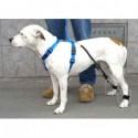 Brassards sytème Biko pour chiens et chats - Paire