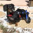 chariot-pour-chien-handicape-walkin-wheels.jpg