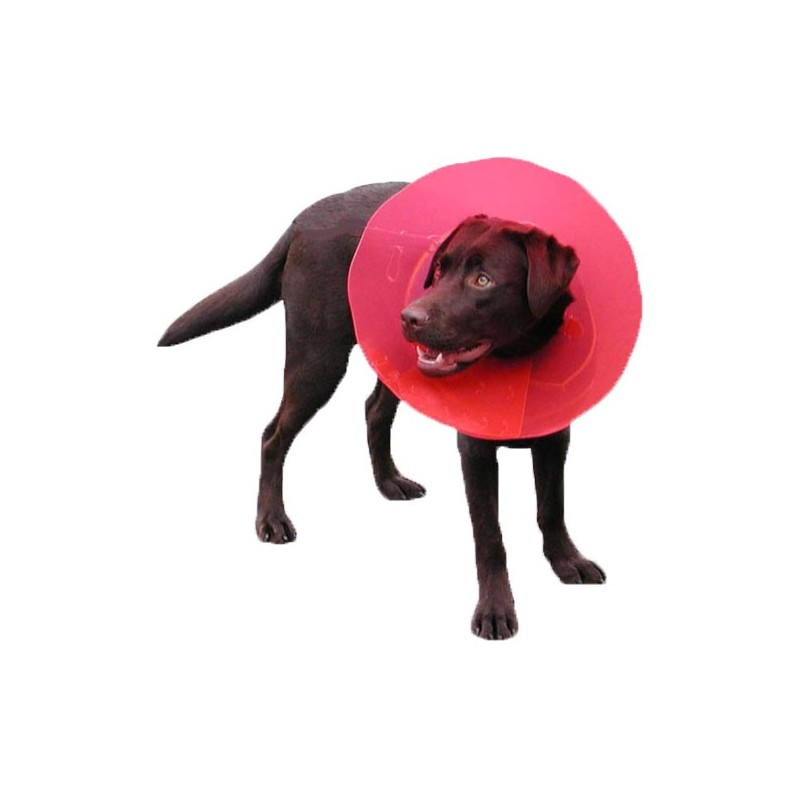 carcan-transcol-protection-pour-chien.jpg